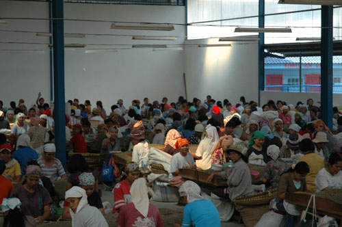 Hand sorting station in Sumatra