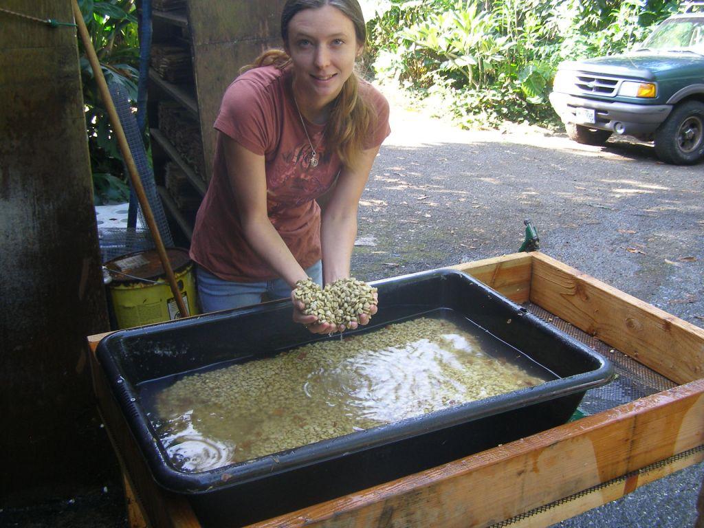 Organic Hawaiian Kona Coffee